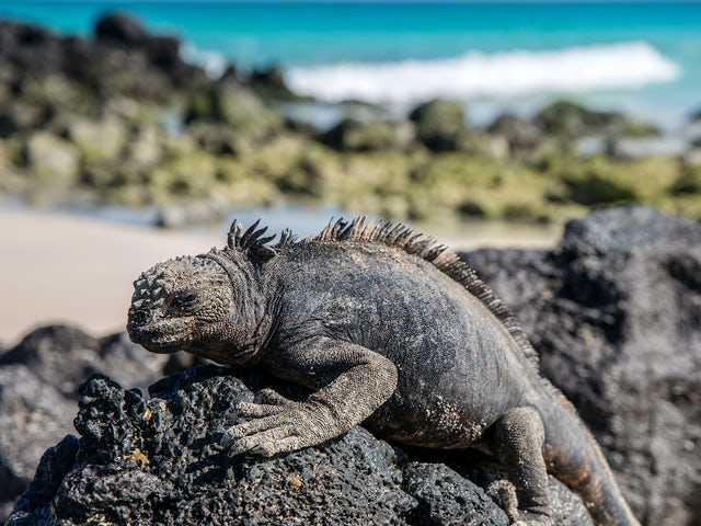Galápagos — West Islands aboard the Archipell I/II