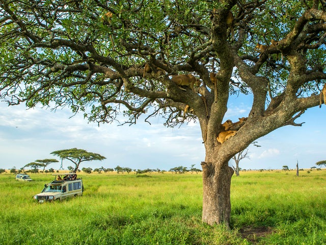 Tanzania Family Journey: A Serengeti Safari