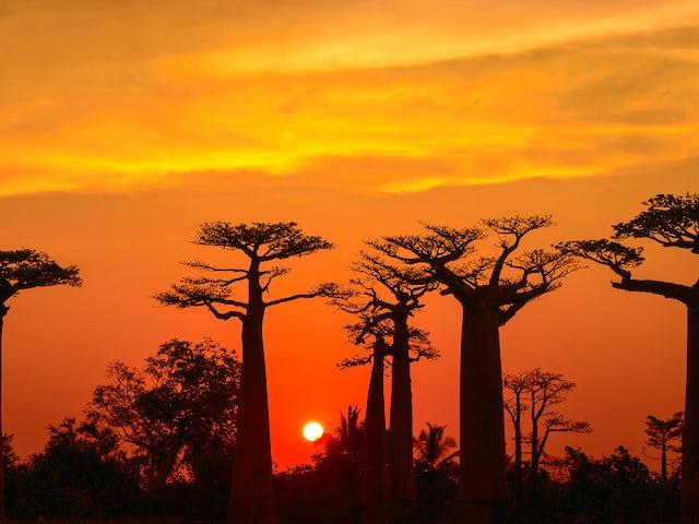 Madagascar - Baobab & Tsingy Explorer